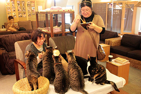 baby-cafe-not-cats
